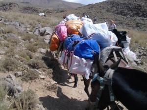 duffel bag on a mule