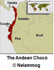Map of the Andean Chocó